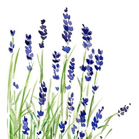 lavendar paint lavender plant art print of original watercolor by