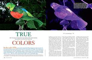 are birds color blind true colors how birds see the world