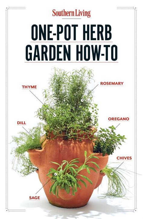 herb garden ashwiniahujaonline s weblog how to grow your own one pot herb garden gardens herbs