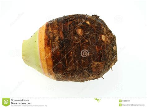 is yam a root vegetable yam root stock photo image 17058190