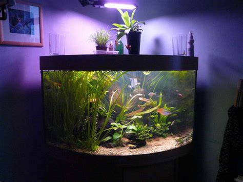 home accessories fish tank decor ideas with purple glow