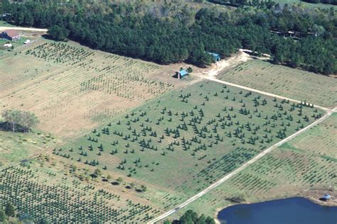 tree farms missouri file missouri tree farm aerial view jpg