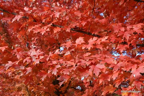 gumbo s pic of the day october 31 2015 the pumpkin gumbo s pic of the day october 12 2015 fall colors