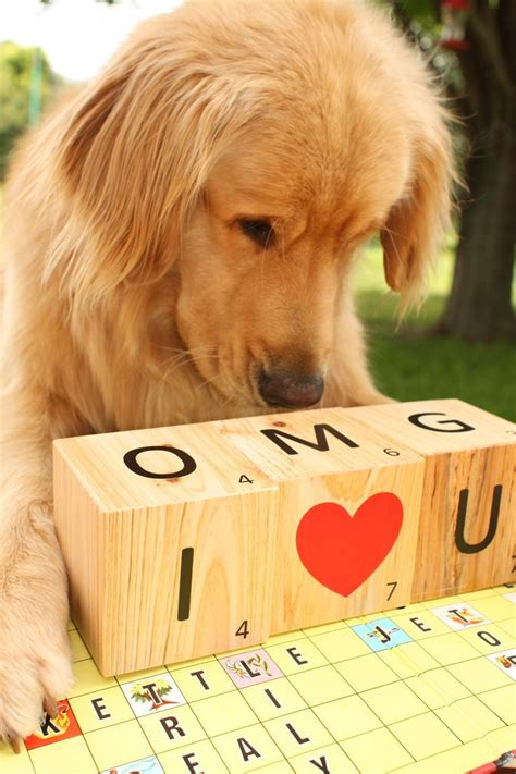 how to love your dog golden retrievers 32 best images about honden on pinterest