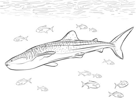 disegno di squalo balena realistico da colorare disegni