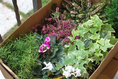fiori da vaso invernali piante e fiori da balcone resistenti foto tempo libero