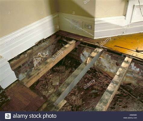 buying a house with dry rot dry rot fungus serpula lacrymans on a sleeper wall beneath the stock photo royalty free image