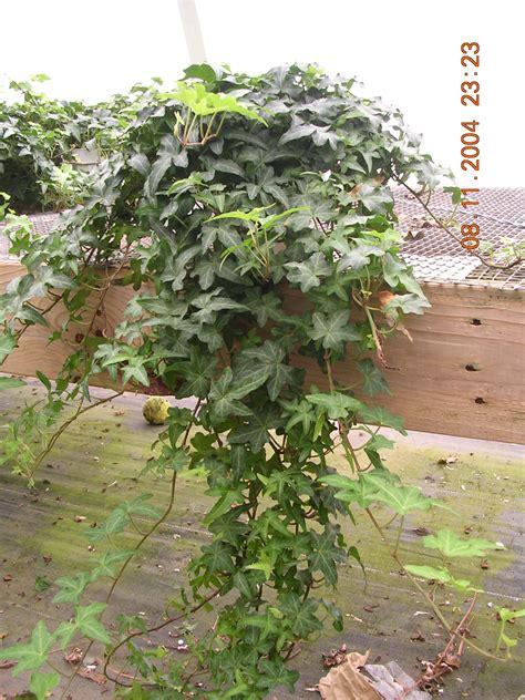 phoenix plants