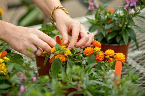 Gardening Degree Horticulture B S Degree Programs Clemson