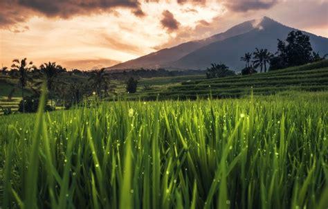 Hp Iphone 5 Di Bali