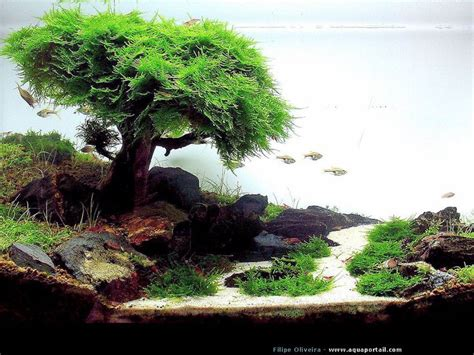 Aquascape Environmental by Best 25 Aquascaping Ideas On Aquarium