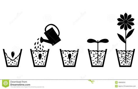 al fiore schema di crescita di pianta dal seme al fiore
