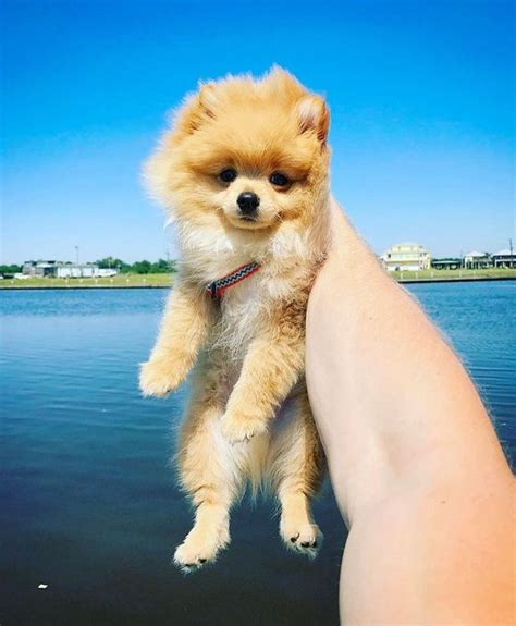 logan paul puppy 268 best images about logan paul kong on dates happy memorial
