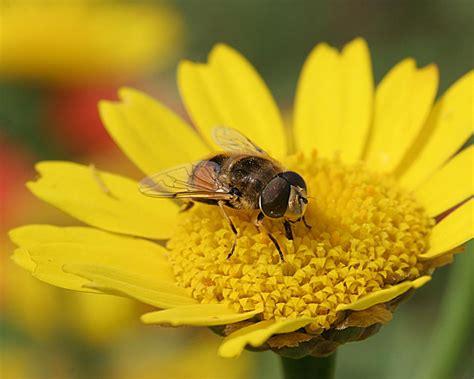 Conheça os beneficios do creme de veneno de abelha