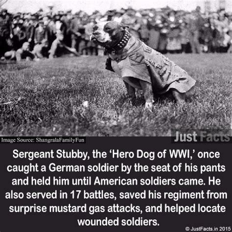 Sgt Stubby Bio Best 20 Sergeant Stubby Ideas On War Dogs When Is Anzac Day And Dogs