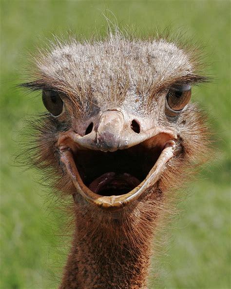 Ostrich Sleeper by Is Sweet From It S Always In Philadephia