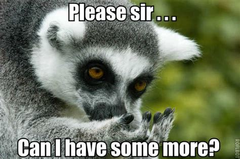 Lemur Meme - everyone calm the f down lemur bing images