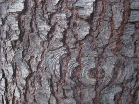 how to paint tree bark texture being a muse elen ghulam
