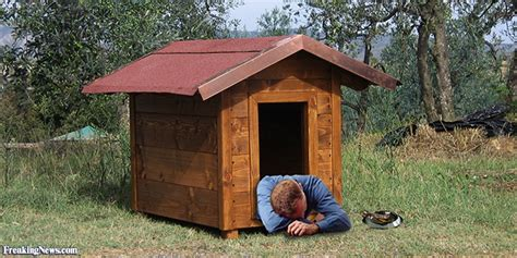 pictures of dog houses man in the dog house pictures