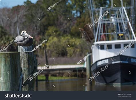 pelican boats website pelican with shrimp boat in background stock photo