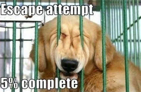 Dog Lover Meme - 21 memes that only dog lovers will understand bulletin