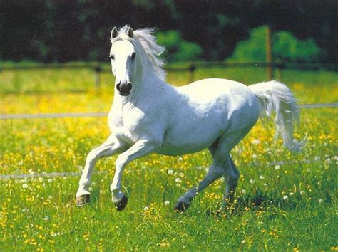 Home Decor Fake Flowers by White Horse Horses Photo 35203614 Fanpop