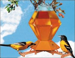 oriole bird feeders jam feeders how to attract orioles at