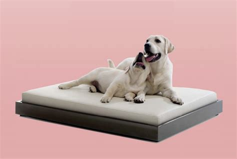 modern dog beds jeffrey welch s blog modern dog beds and bowls from