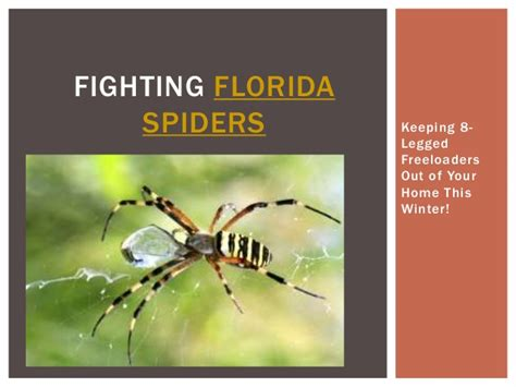 how to get rid of freeloaders in my house fighting florida spiders keeping 8 legged freeloaders out of your h