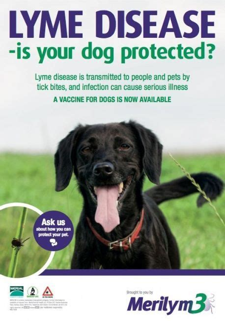 lyme disease vaccine for dogs new lyme disease vaccine for dogs