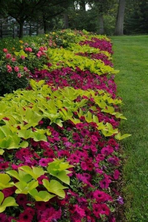 design annual flower bed 1000 images about garden ideas on pinterest backyards