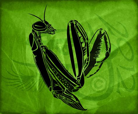 preying mantis tattoo preying mantis tribal design by amoebafire on