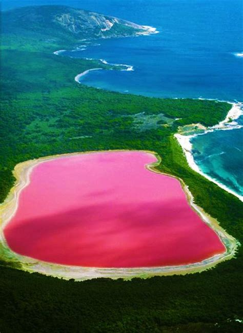 pink lake australia lake hillier a pink lake in western australia