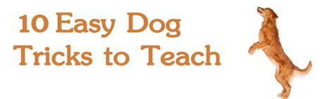 tricks to teach your puppy 10 easy tricks to teach your k9 wellness association