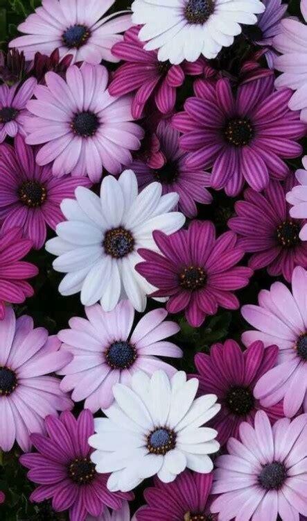 imágenes de flores wallpapers wallpaper flor tumblr