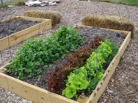 Delicious Piccolo Orto In Giardino #1: orto-giardino_NG2.jpg