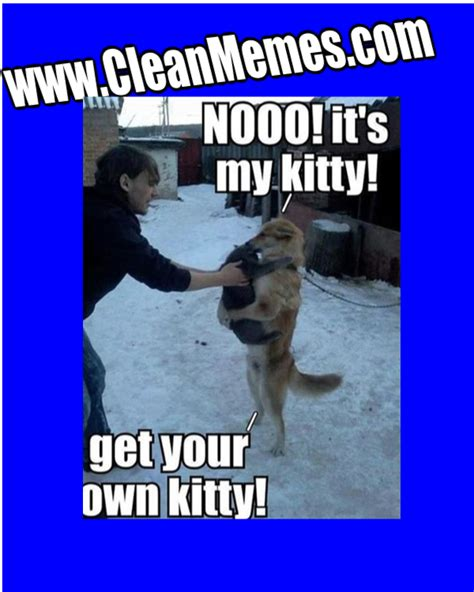 Funny Clean Memes - funny clean cat pictures www pixshark com images