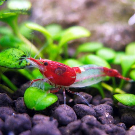 chupones alimentadores agua dulce peces invertebrados y accesorios fauna acuario