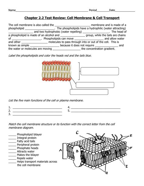 Cell Membrane Structure And Function Worksheet by Cell Membrane Structure And Function Worksheet Deployday