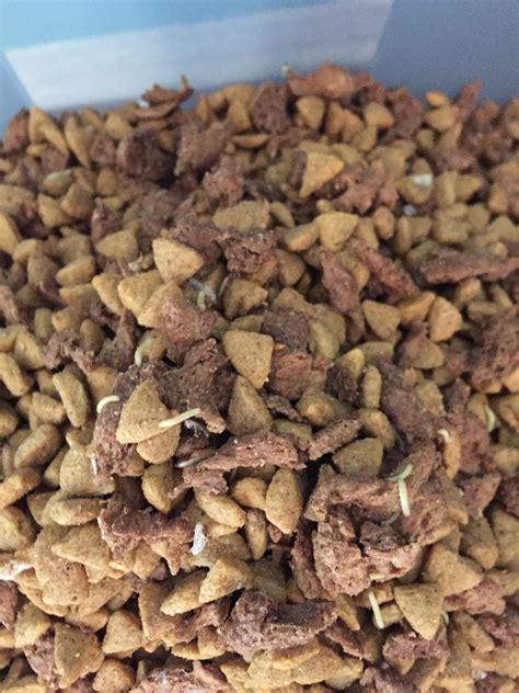 beneful food recall beneful pet foods breeds picture