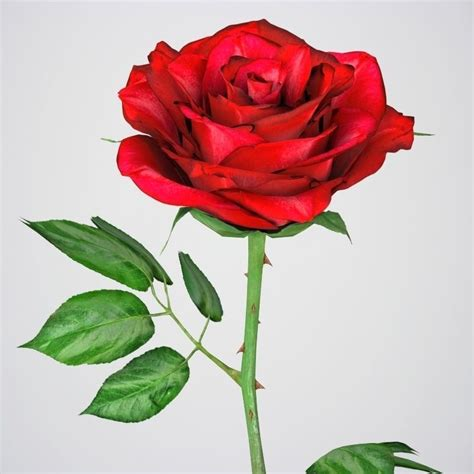 3d model realistic 3d rose flower vr ar low poly max