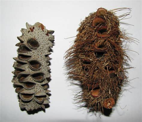 related image weird plants australian plants