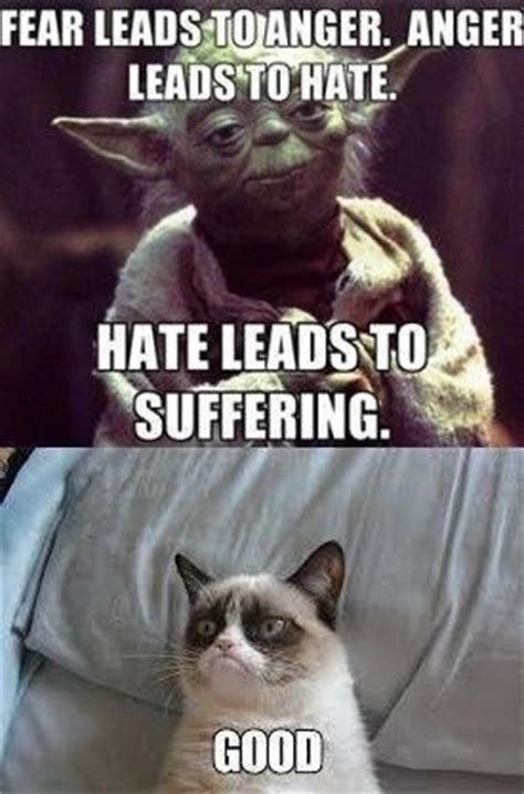 Good Meme Grumpy Cat - evening jokes 20 pics