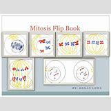 Mitosis Flip Book Printable | 728 x 546 jpeg 100kB