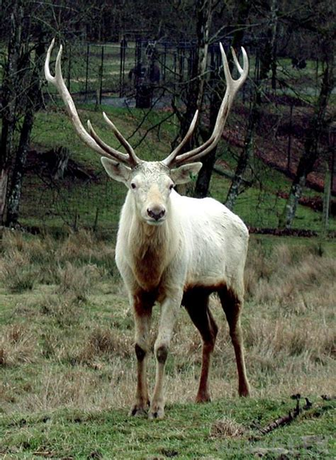 types of bucks what does a taxidermist do with pictures