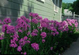 17 best images about partial shade garden on pinterest gardens container plants and container