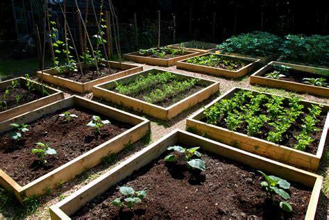 Progress in the raised bed vegetable garden   The Modern