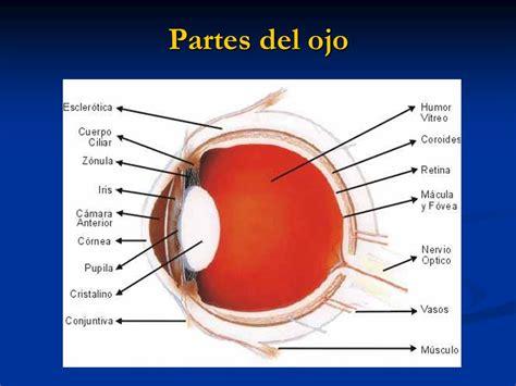 imagenes de ojos humanos y sus partes el ojo humano el ojo o globo ocular es el 243 rgano que