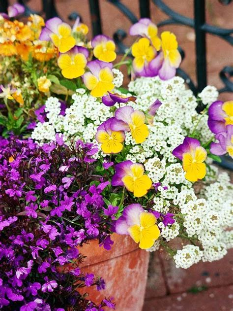 Annual Garden Flowers Top Annual Plant Pairings Gardens Flower And Pansies