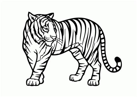 tiger template printable tiger coloring page template coloring page